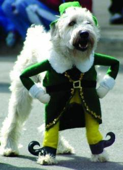 dog leprachaun costume
