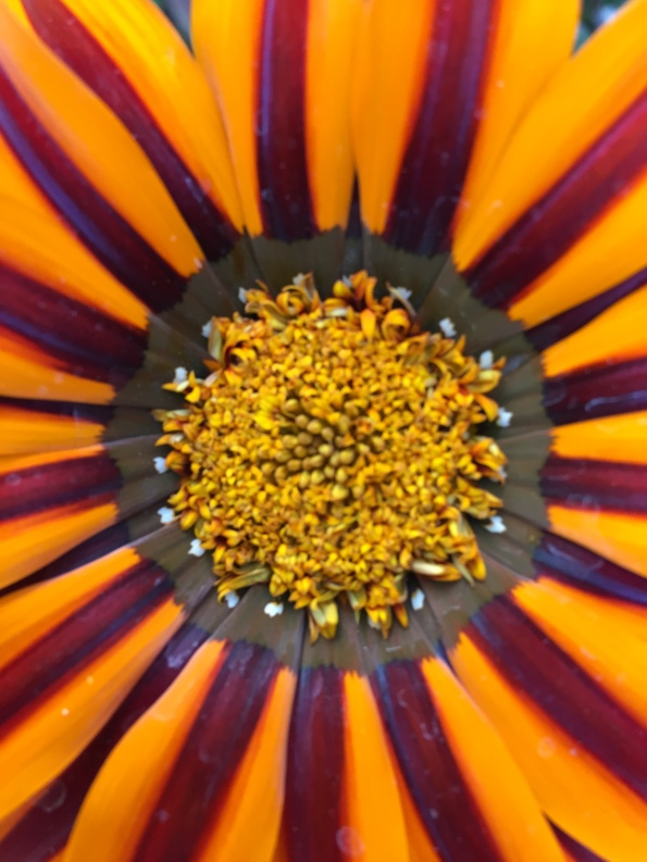 Gold Orange Flower - Close-up - Orange 2018-3-9