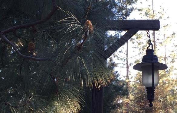 Image - Pines & Lamp - CA Adventure 2018-2