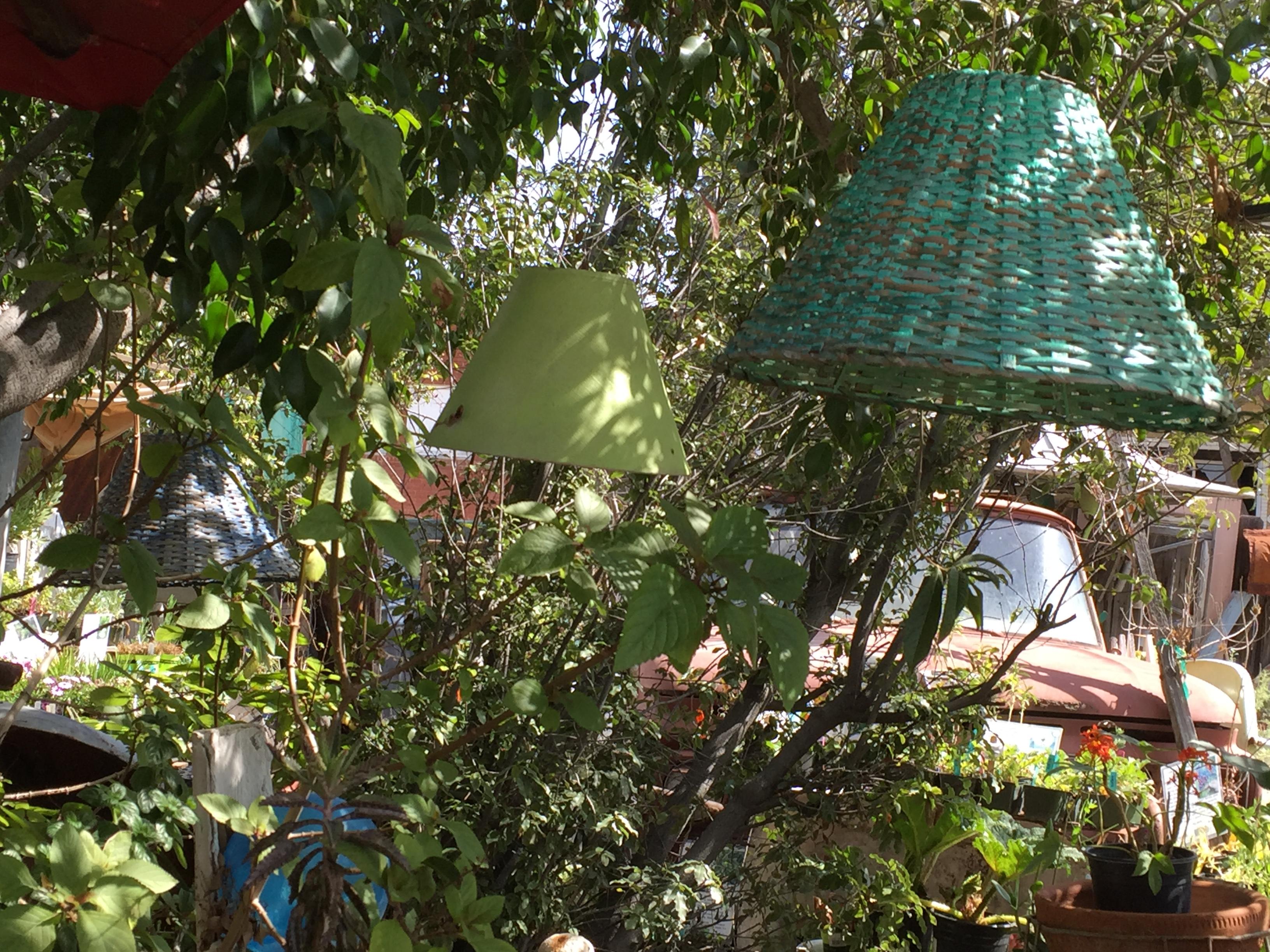 Lampshades in the Garden - Orange 2018-3-9