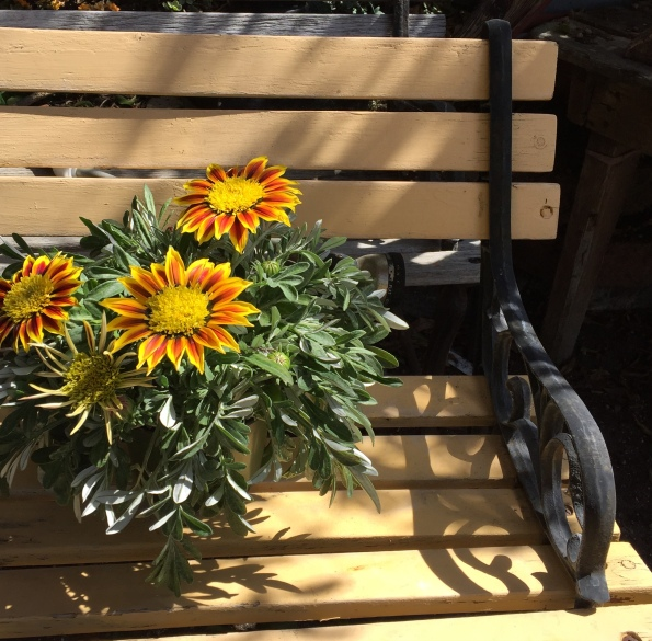 Orange Flowers on Bench