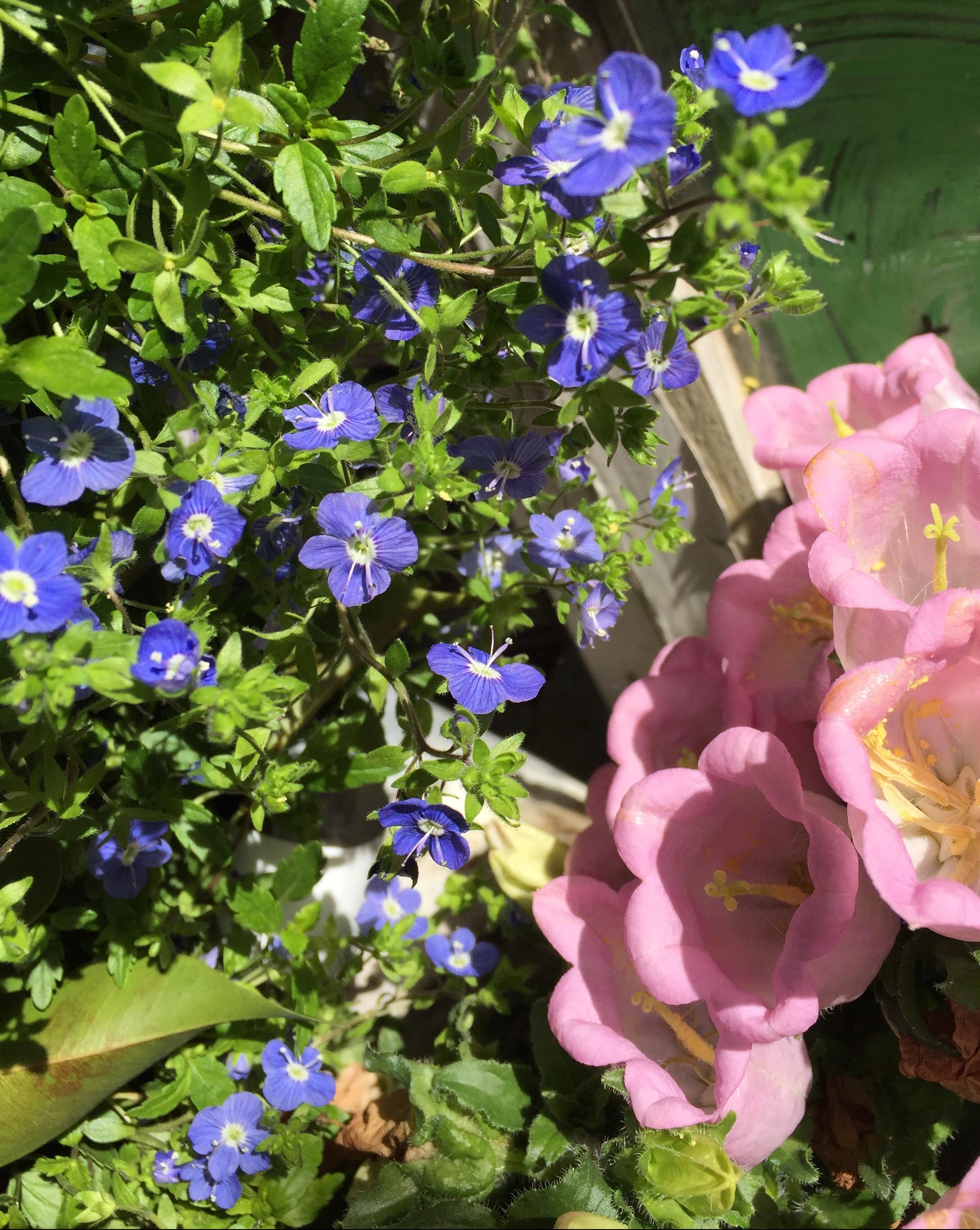 pink-and-blue-flowers-orange-2018-3-9.jpg