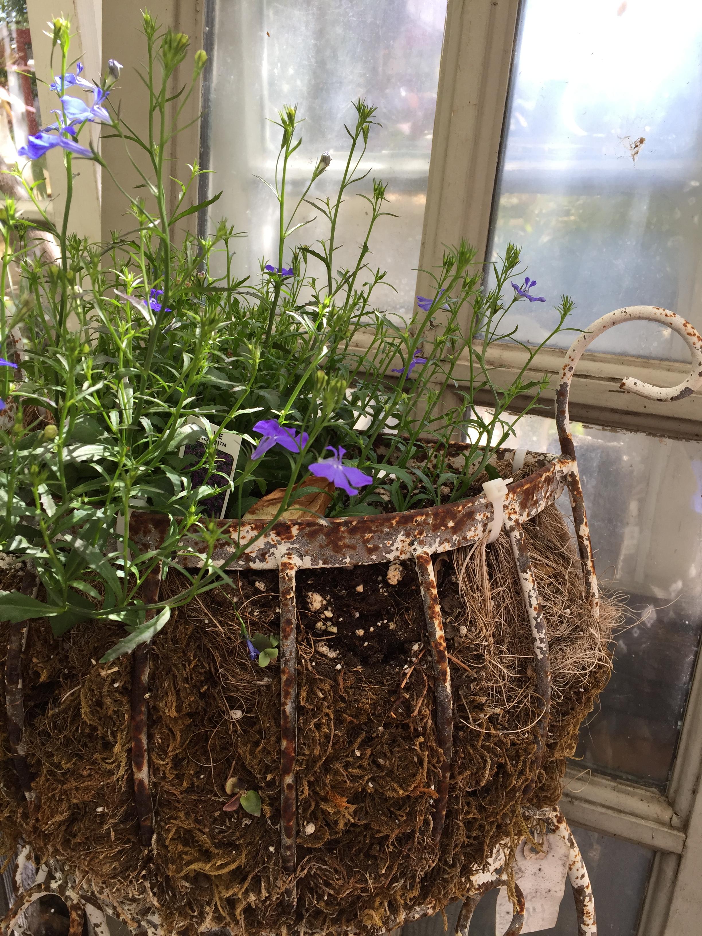 Purple Flower Basket & Hazy Window - Orange 2018-3-9