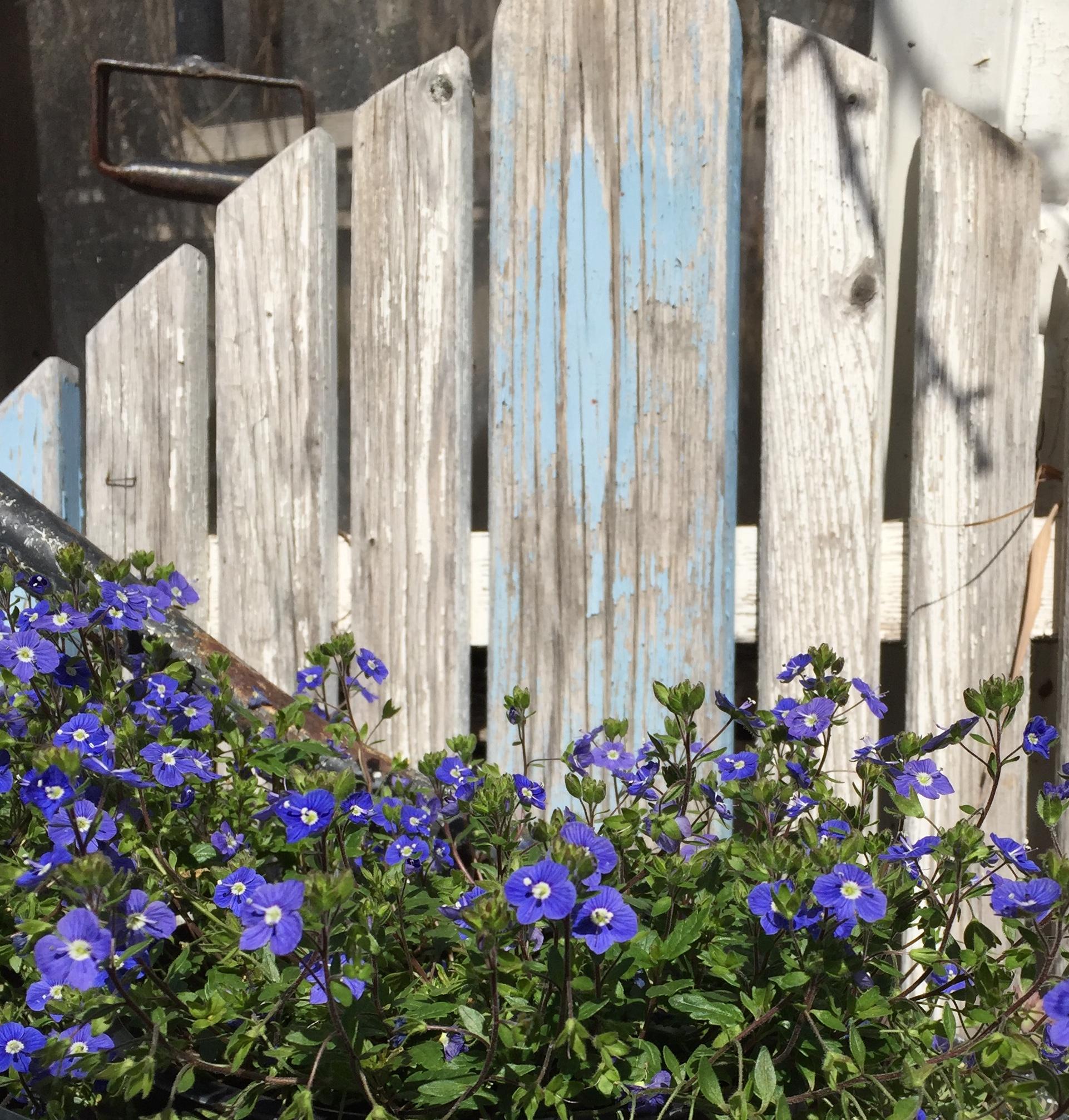 Purple Flowers Against Wood - Orange - 2018-3-9