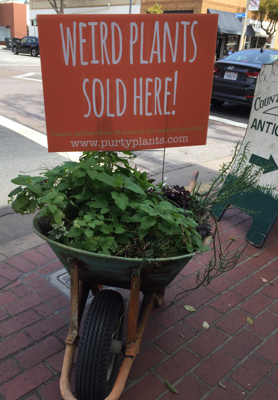 Weird Plants Sold Here - Orange 2018-3-9