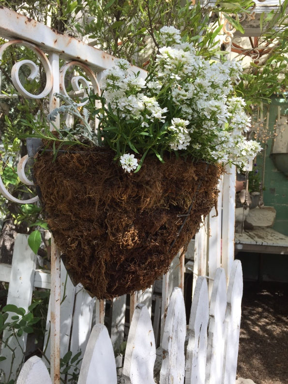 White Flower Basket on Fence - Orange 2018-3-9